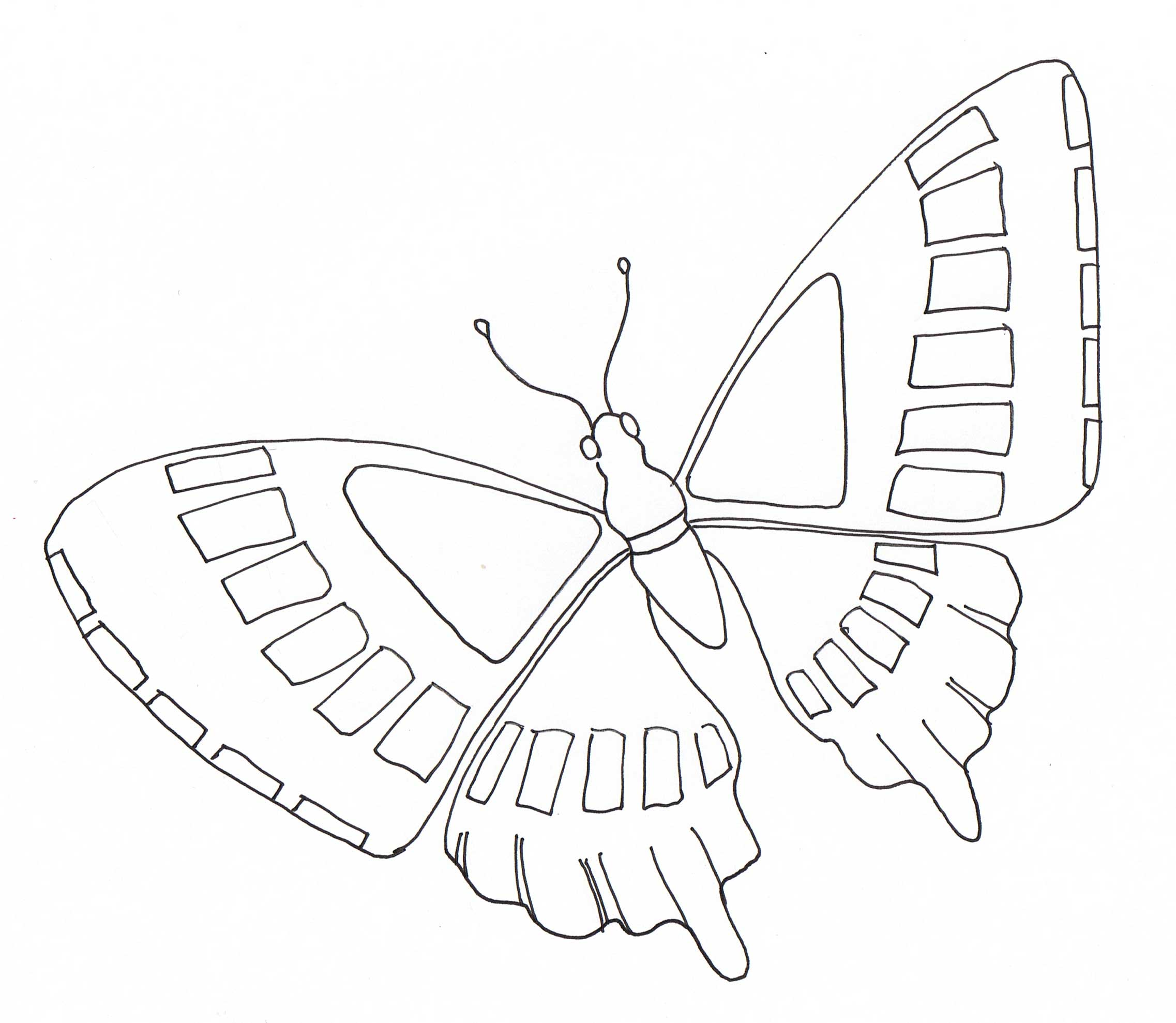 Coloriage papillon 2 - Dessin papillon ...
