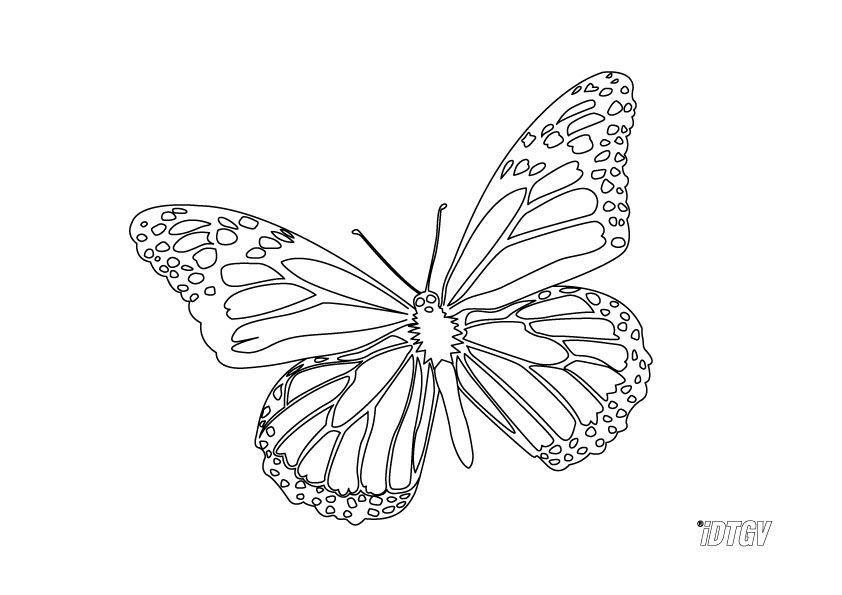 Coloriage papillon 3 - Dessin de petit papillon ...